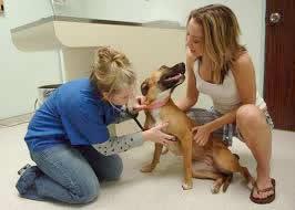 Compare Dog Insurance