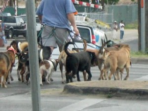 Man Walking Dogs - The Cost of Keeping A Pet Healthy