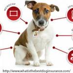Getting Pet Insurance