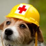 Pet Care Videos