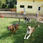 Promote Your Pet Daycare Business