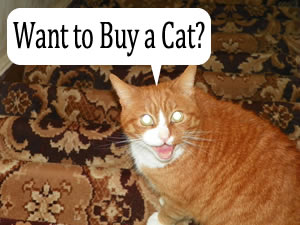 Want To Buy A Pet Cat?