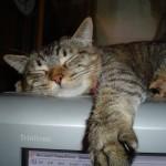 Proper Cat Care